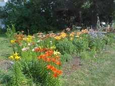 Her field of lily's